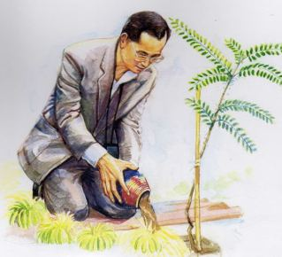 ปลูกต้นไม้
